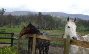 Fabish and his yearlings, picture courtesy Racing Victoria Ltd.
