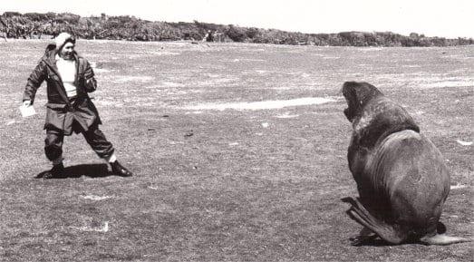 My mum vs an elephant seal, Enderby Island 1968